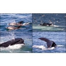 Dolphin and Whale Encounter for Two